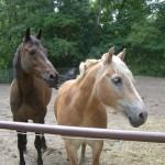Lorenzo und Charlie